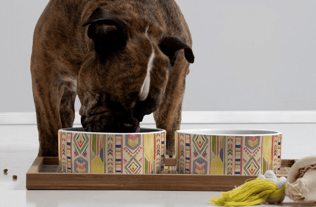 Dog Bowls That Will Make Your Dog (and You) Drool