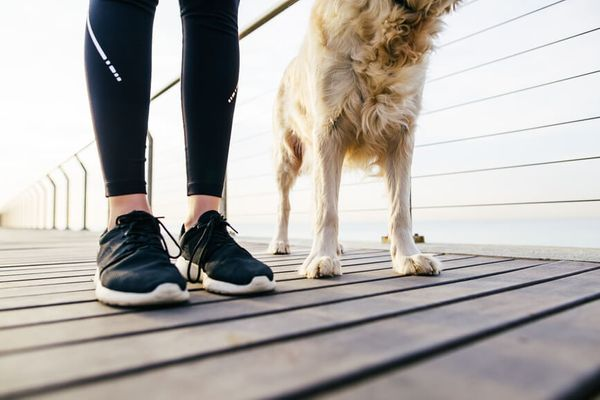 How to Take Your Dog on a Healthier Run