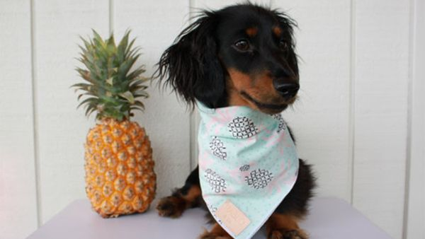 8 Bandanas That Show Off Your Pup's Personality