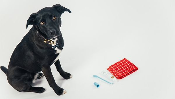 The Stress-Free Way to Brush Your Pup's Teeth