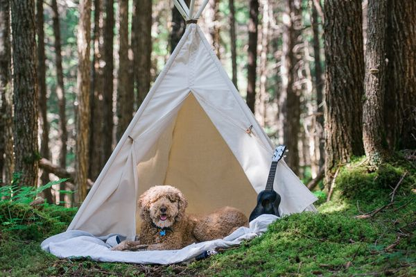 The Smartest Gear for Your Pup Camping Trips