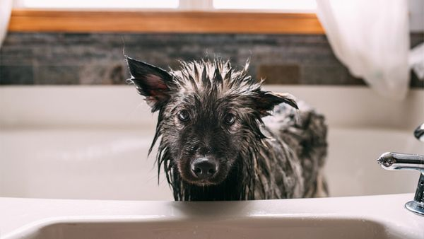12 Bath-Free Ways to Keep Your Pup Clean
