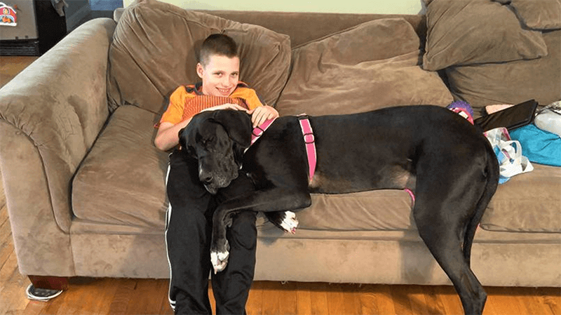 Great Dane & Great Kid: Meet Team Hunter & Wendy
