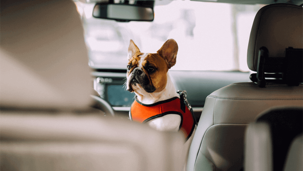 How to De-Stress Holiday Travel With Your Dog