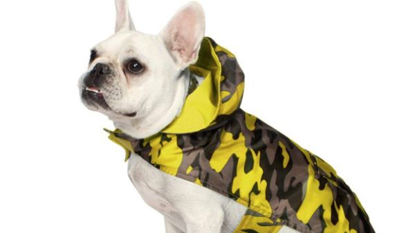 Rain Gear That Will Keep Your Pup Dry in Style