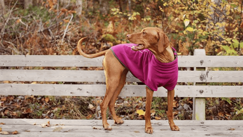 7 Dog Coats for Winter You'll Wish You Could Wear Too