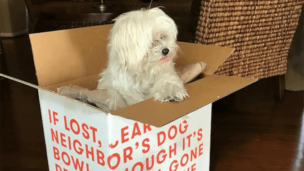 Ollie Foodie: Joey the 12-year-old Maltese