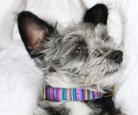 These Summer Collars Will Crush It at the Beach
