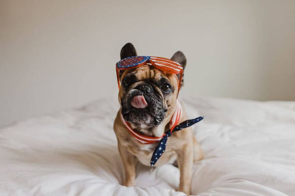 The Most Patriotic July 4th Gear For Every Pup