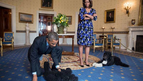 8 Reasons Why We'll Miss Bo and Sunny Obama