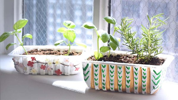 How to Turn Your Ollie Trays into Herb Planters