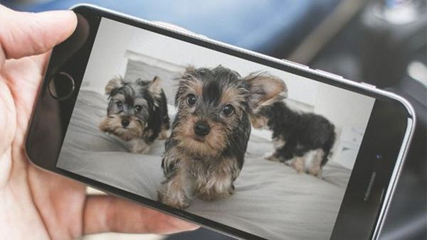 The Next Gen of Gadgets to Keep in Touch With Your Pup