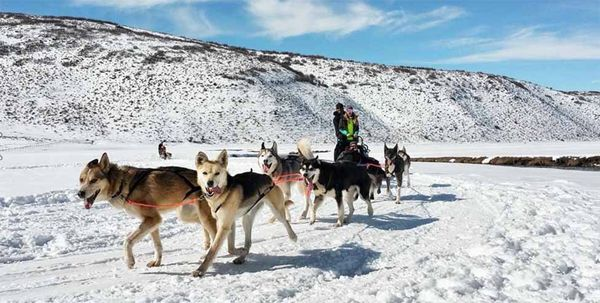 "Meet the Rescue Sled Dogs Who Are Redefining ""Mushers"""