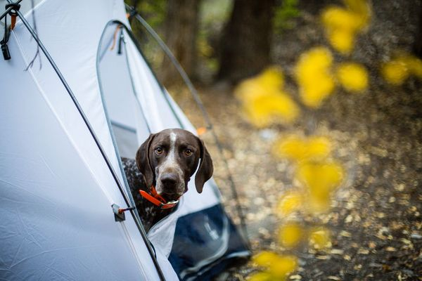 The 7 Best Spots to Take Your Pup Camping This Summer (and Fall!)