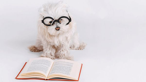 The Pup-Approved Summer Reading List for Pet Parents