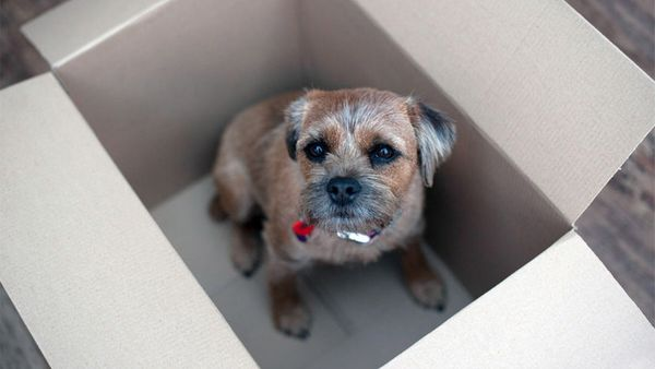 The Anti-Stress Guide to Moving With Your Dog
