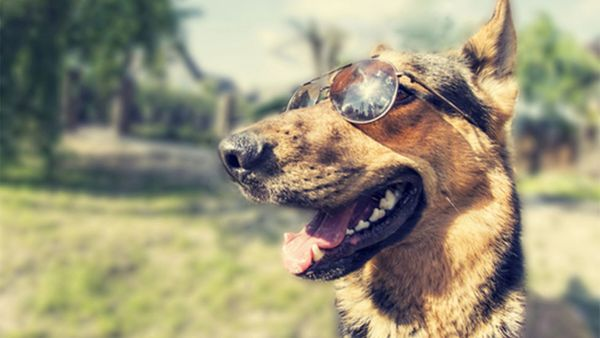 How to Prevent Your Pup from Getting Skin Cancer