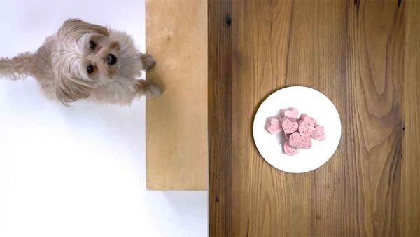 Ollie Knows: How to Make a Healthy Valentine's Day Treat