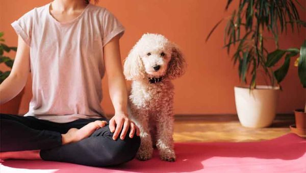 5 Wellness Trends That Will Keep Your Dog Healthy in 2018