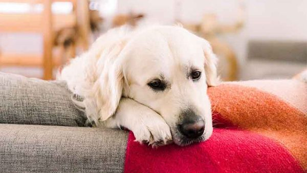 The Ultimate Guide to De-Stressing Your Dog