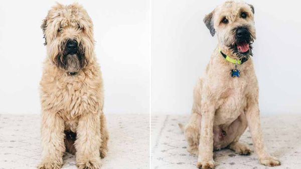 Does Your Pup Need a Summer Trim?