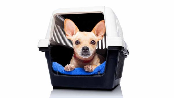 4 Ways to Make Crate Training Your Pup Painless
