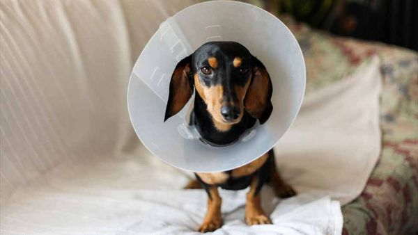 4 Things I Wish I Knew Before Getting My Dog Fixed