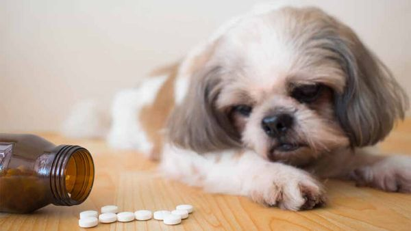 Top Toxins For Dogs—Plus How to Keep Your Pup Safe