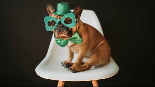 6 Healthy St. Patrick's Day Treats for Your Pup
