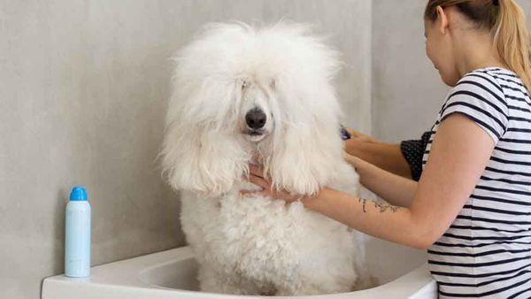 What to Do When Your Dog's Deathly Afraid of the Groomer