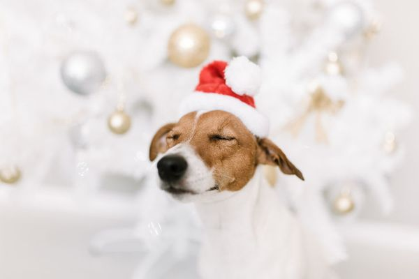 10 of the Best Pup-Friendly​ Holiday Events This Year