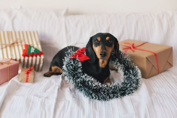 The Best Black Friday & Cyber Monday Deals for Dogs