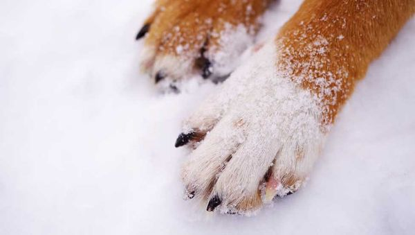 How to Protect Your Dog's Paws All Winter Long