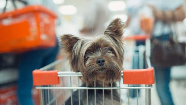 An Easy Guide to Safe and Ethical Puppy Shopping