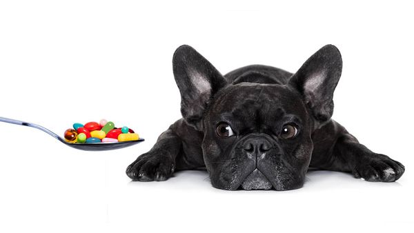 Does Your Pup Really Need a Vitamin?