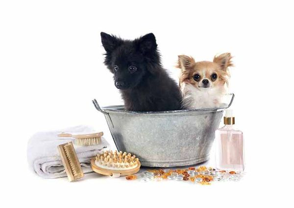"The Best Natural ""Beauty"" Products For Your Pup"
