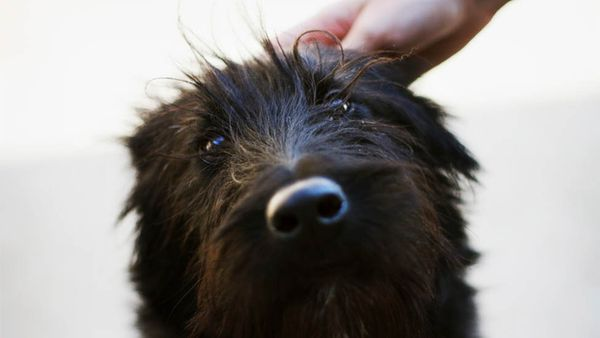 How to Solve Your Pup's Dandruff Problem