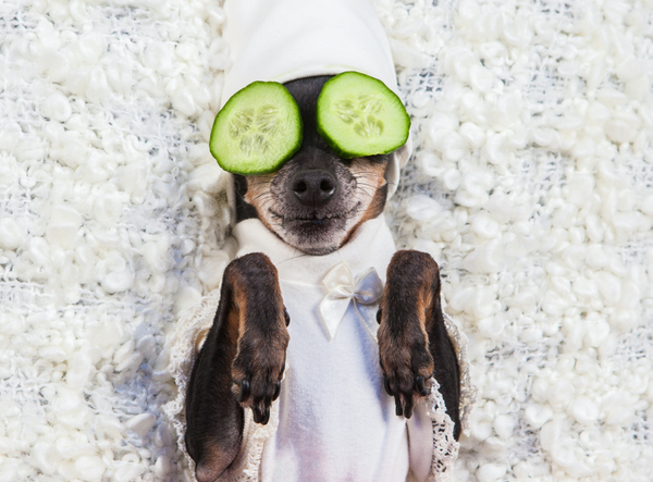 The Top Pup Wellness Trends for 2019