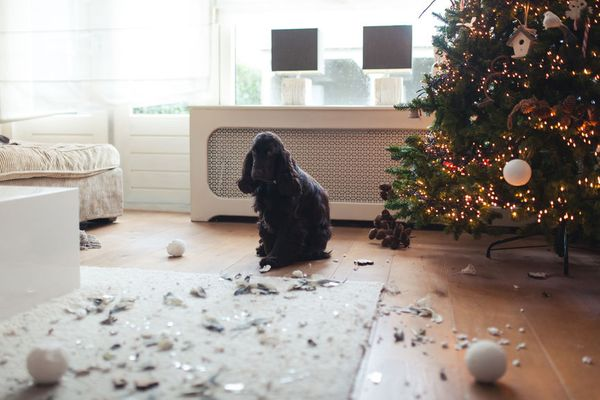 The Biggest Holiday Hazards for Pups