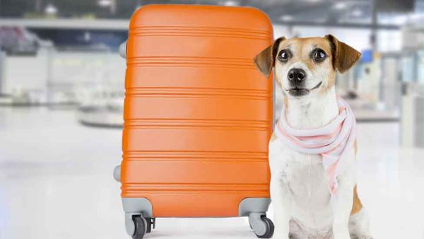 The Best Airlines for Pups, Paws Down