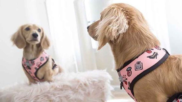 Find the Perfect Harness for Your Pup