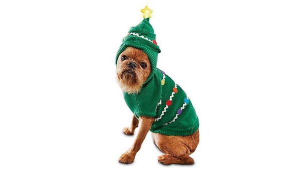 Deck Your Dog in The Most Festive Gear Ever