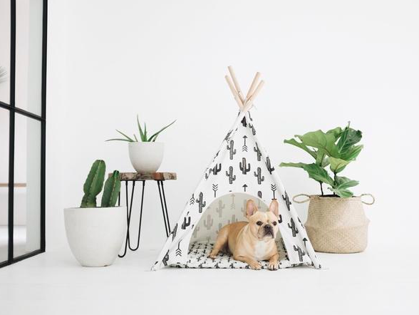 9 Chic Pup Products To Upgrade Your Home With in 2019