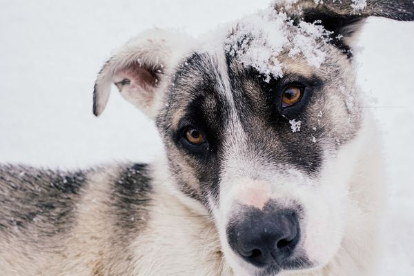 4 Essential Oils Your Dog Needs This Winter