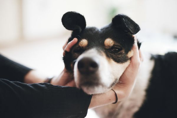 7 Ways You Don't Realize You're Actually Annoying Your Dog
