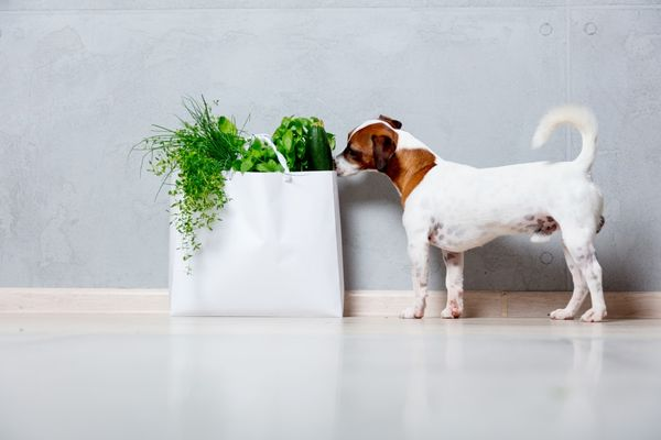 The 10 Superfoods for Dogs (That are Probably in Your Kitchen)