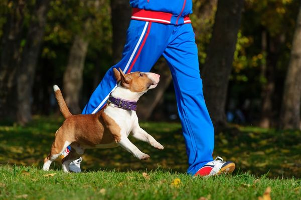 5 Workouts to Do With Your Dog