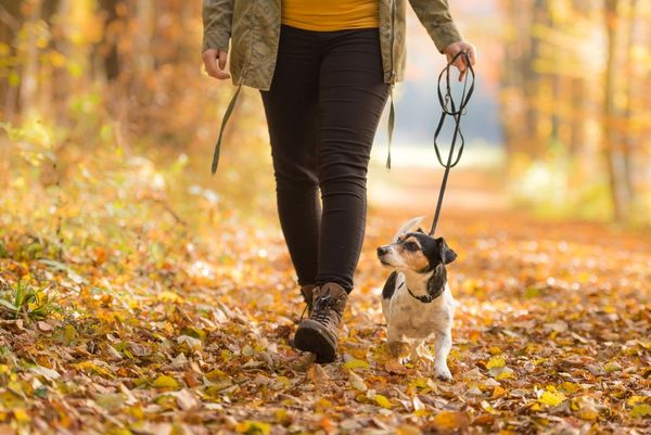 Can Dogs Get Poison Oak? How to Keep Your Pet Safe