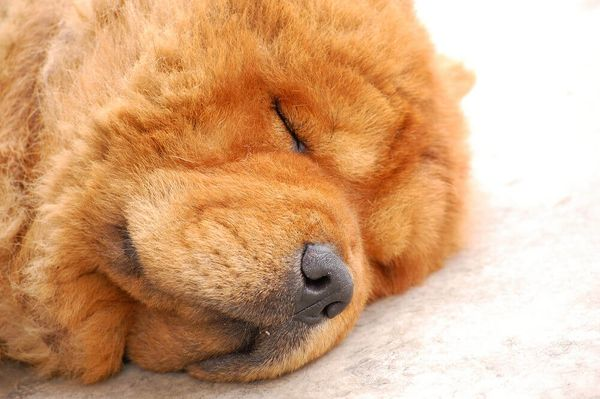 Why Do Dogs Snore? Should I Be Concerned if My Dog is Snoring?