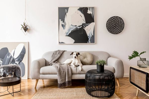6 Best Dogs For Apartment Living